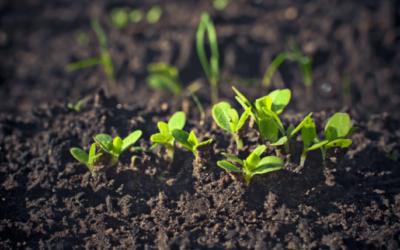Projet «fertilité des sols hennuyers»